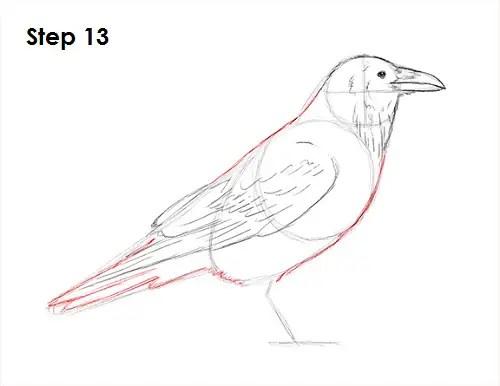 Draw Raven Bird 13