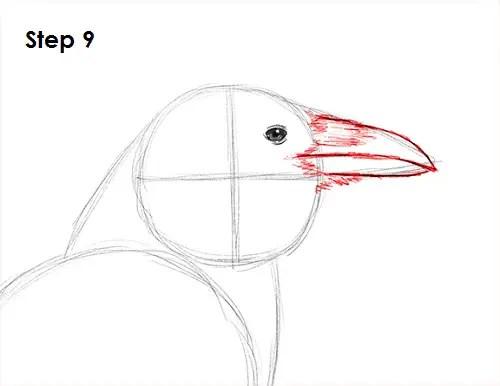 Draw Raven Bird 9