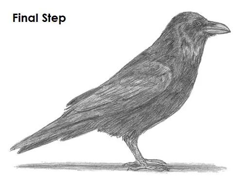 Draw Raven Bird