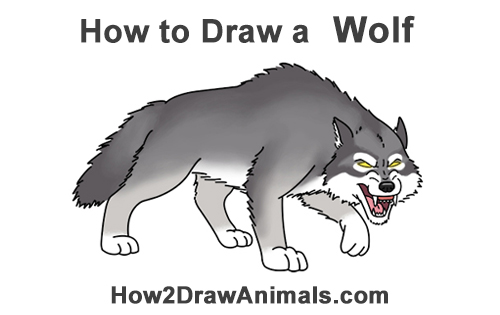 How To Draw A Wolf Growling Cartoon