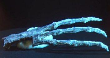 nazca mummies 2