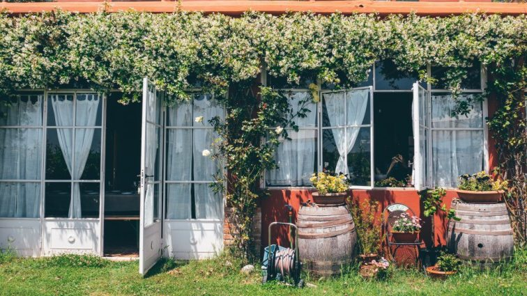 Sprawling vines on vineyard tasting room in Tenuta Santini Rimini Emilia-Romagna