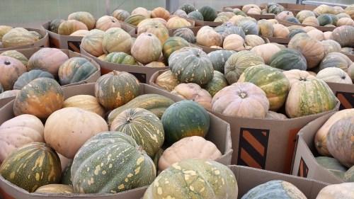 pumpkin farm ontario