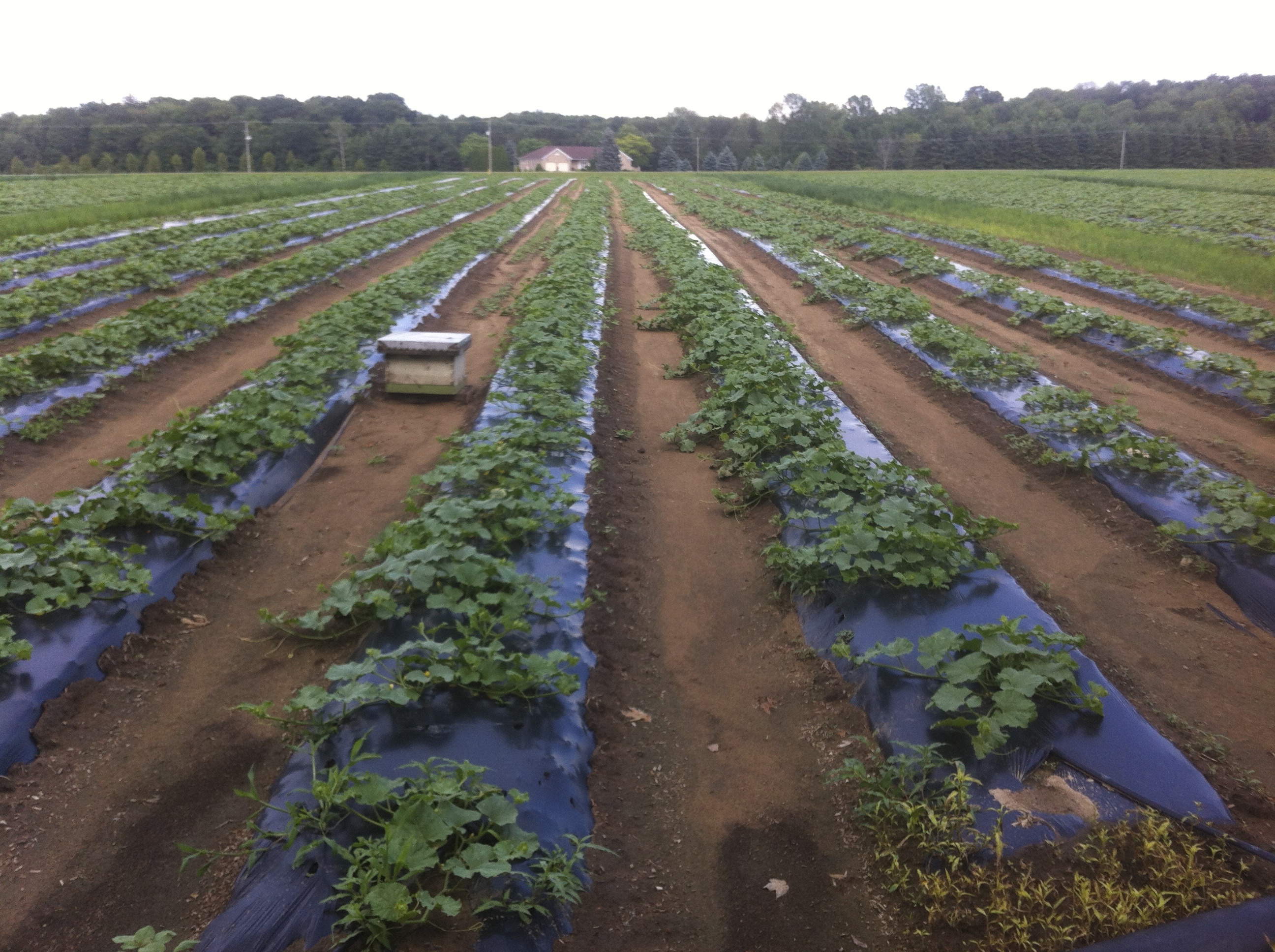 Farm to table crops