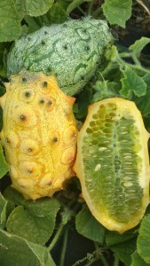 African Horned Melon