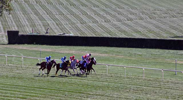 How to Bet on Horse Racing and Win