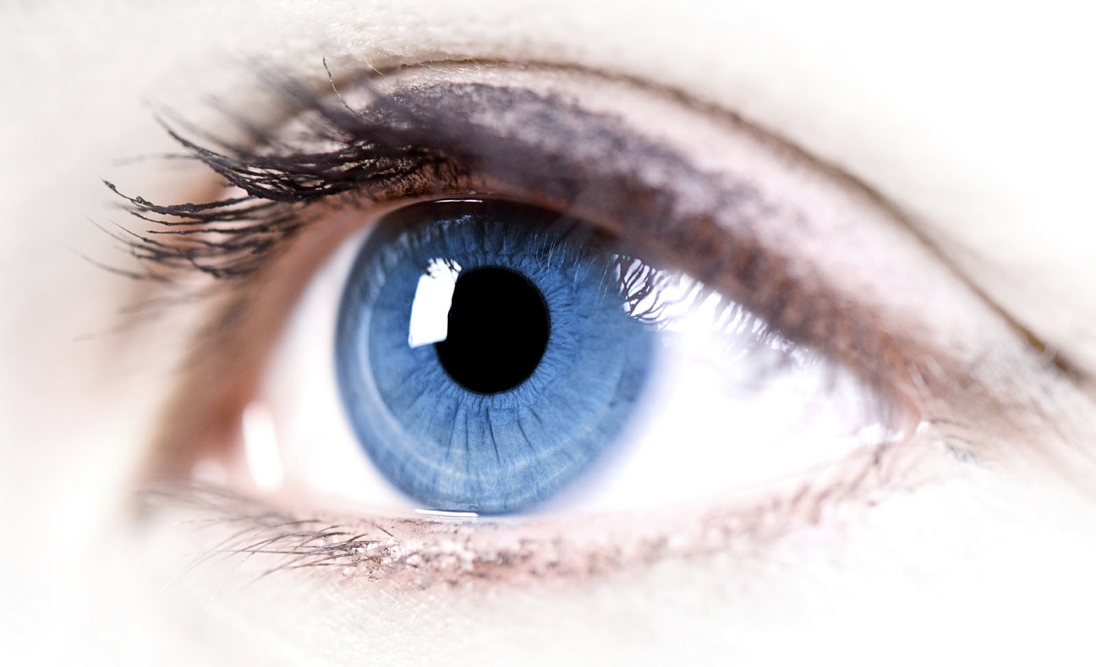 Science Of Vision How Do Our Eyes Enable Us To See