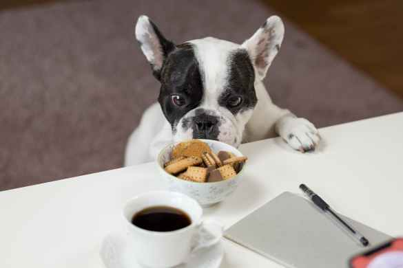 Chocolate, coffee, and caffeine are very harmful foods for your dog.
