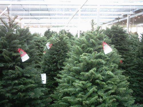 How Much Does A Christmas Tree Cost