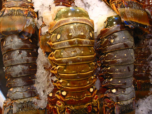 How Much Does A Lobster Tail Cost Howmuchisit Org
