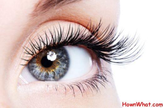 thick longer eyelashes