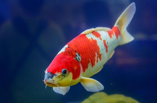 Outdoor Fish Pond Supplies