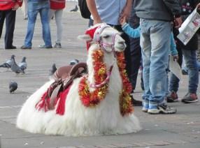 A festive llama in Simon Bolivar Square