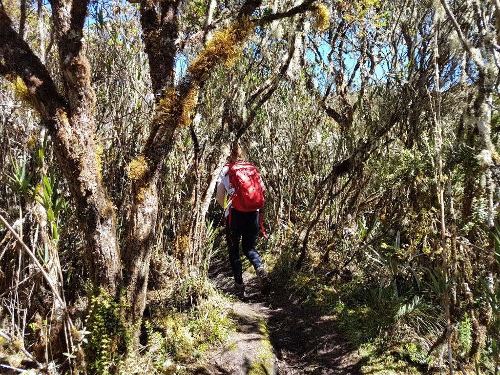 Chingaza hike