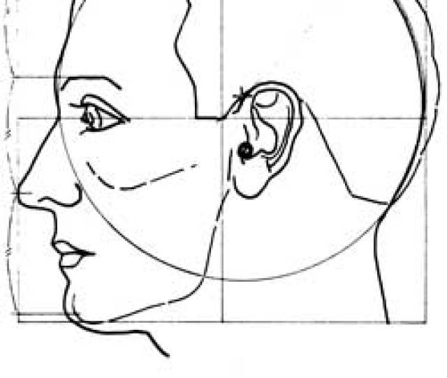 Above The Face Divided Vertically Into Seven Center The Chin Tip And The