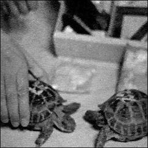 The two tortoises launched into lunar orbit