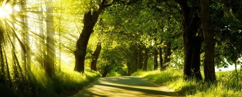 road past forest