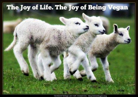 lambs go vegan HTGV
