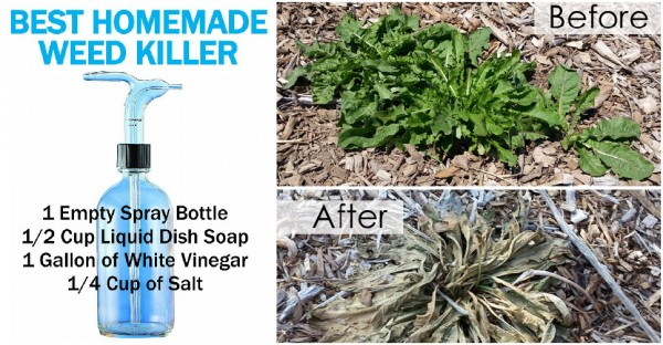Best Homemade Weed Killers How To Instructions