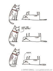 cat-humorsavasana