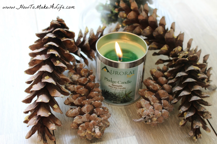 Aurorae Pine Soy Candle with pinecones