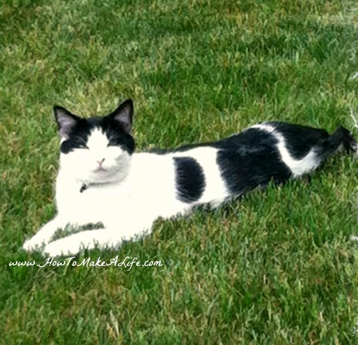 Sam Black and White cat