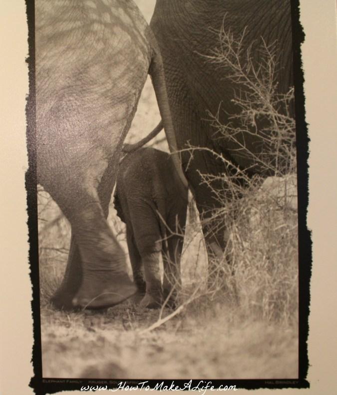 Hal Brimley elephants