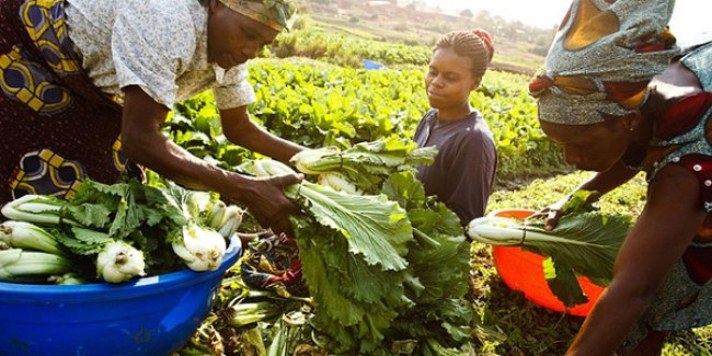 Image result for African Agriculture