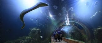 Ir al evento: ENTRADAS OCEANOGRAFIC