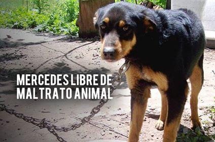 El Partido Vecinal MIC exige multar el Abandono Animal