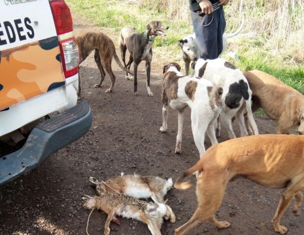 Cinco cazadores furtivos atrapados in fraganti