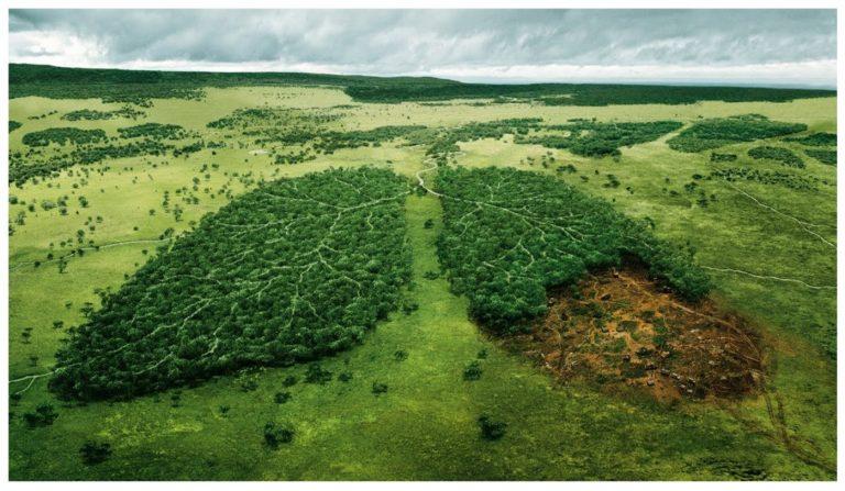 ¿La pandemia del CoronaVirus podría relacionarse con la falta de montes y bosques?