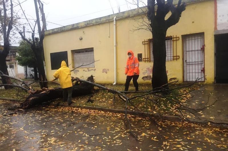 Protección Civil actuó ante árboles caídos por las fuertes lluvias