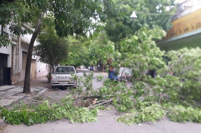 Trabajaron en árboles y ramas caídas por los fuertes vientos