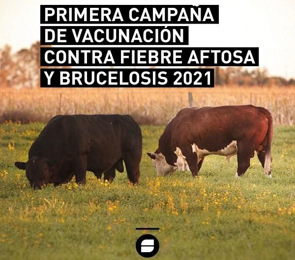 Aftosa: Más de 30 millones de bovinos vacunados en la segunda campaña de 2020