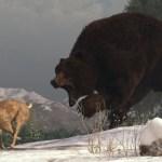 Ursul si iepurasul