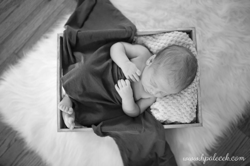 hamilton-new-jersey-newborn-portraits