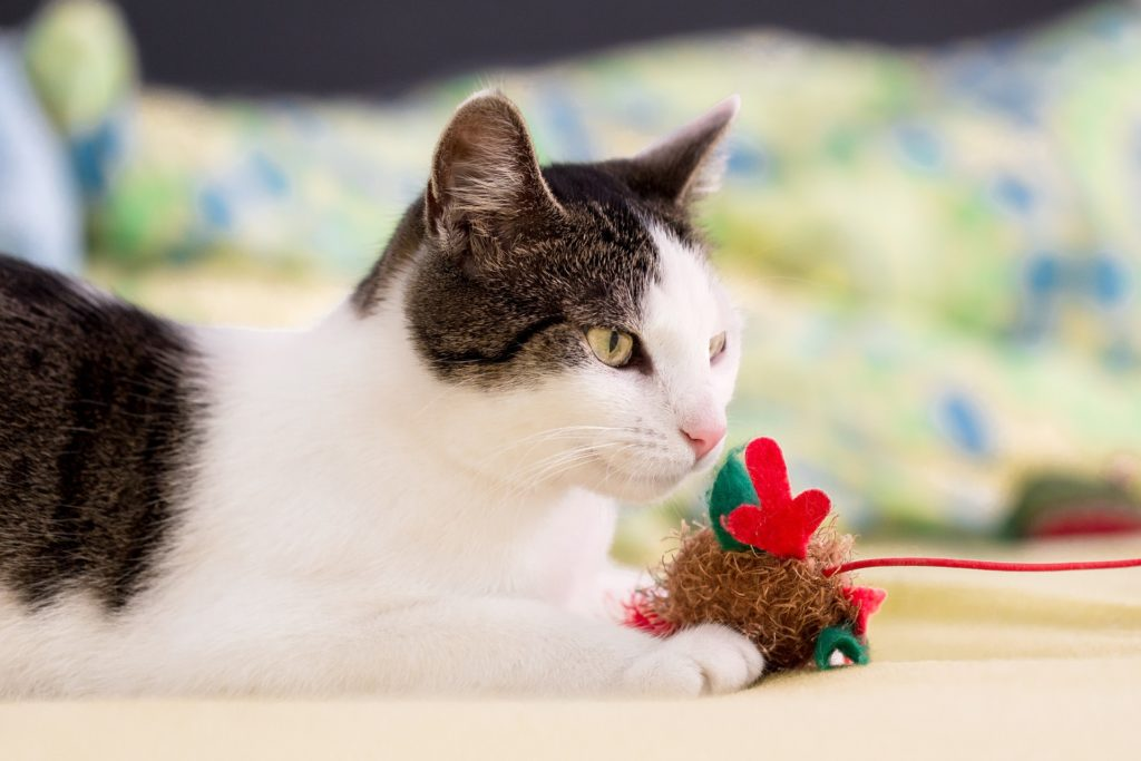 a cat playing with its tots