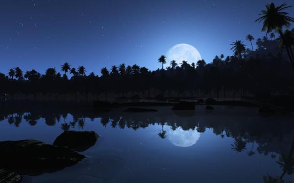 Пальмы, луна, звезды, отражения обои для рабочего стола ...