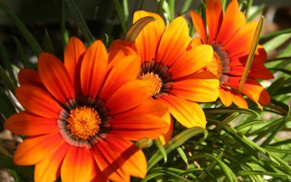 Зелень, цветы, лепестки обои для рабочего стола, картинки ...