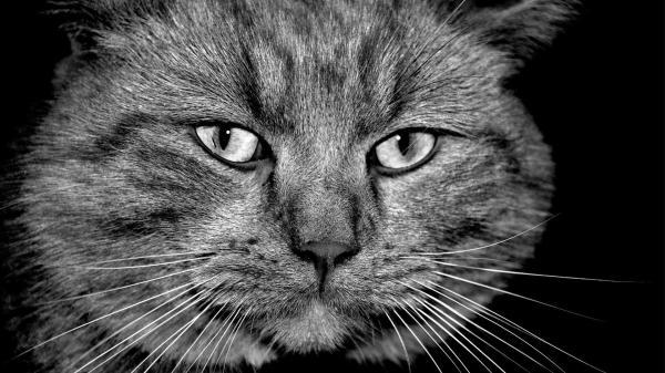 Мордастый кот обои для рабочего стола, картинки, фото ...