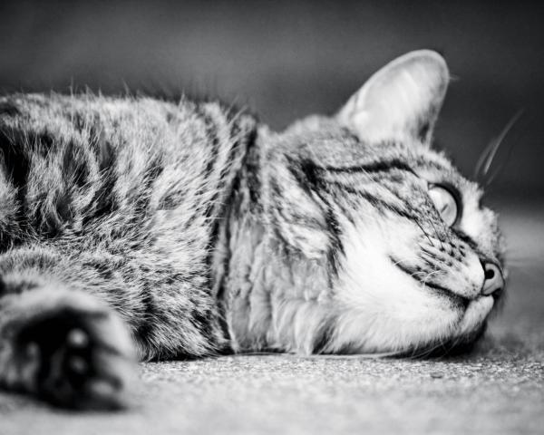 Кот на отдыхе обои для рабочего стола, картинки, фото ...
