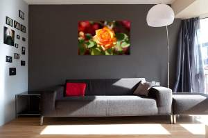 Art Photography Home Decor