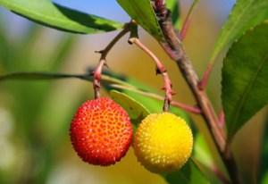 Red & Yellow Berries on Tree Photo Print