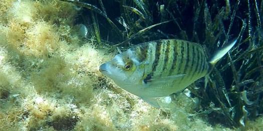 20150620 Cabrera - fish