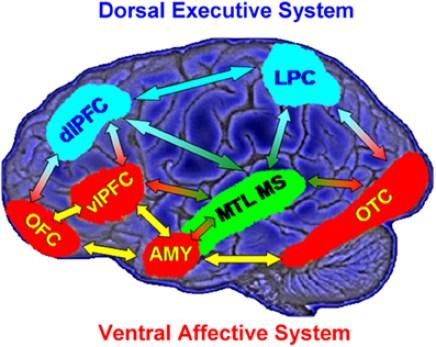 ventral affective system