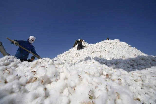 People work amidst massive piles of cotton in China's Xinjiang province.