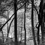 16.10.20 - Jones Hill Wood - Zoe Broughton @CameraZoe