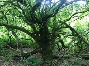 Ancient woodland; nature; truth trail; hs2; stop hs2; stop ecocide; stop the harm