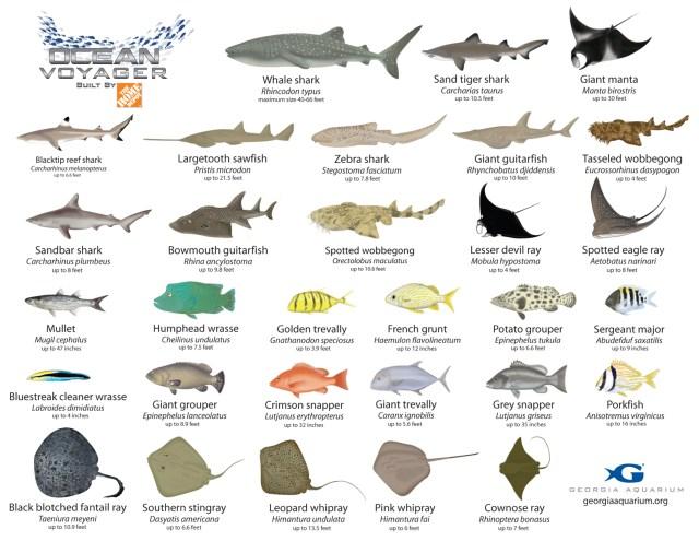 Aquarium Fish Names Tropical Aquarium Fish Guide 2017 Fish Tank
